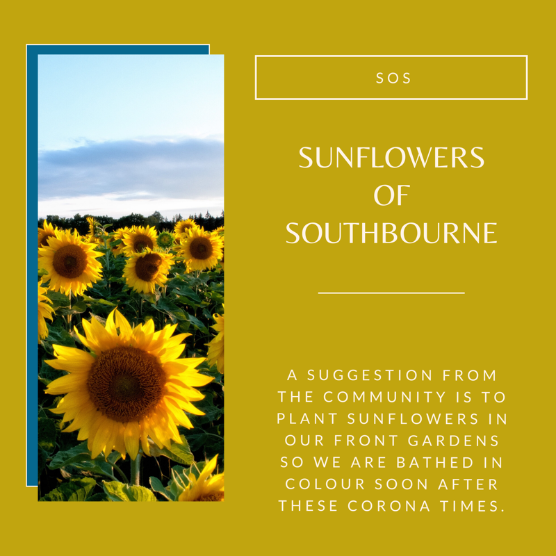 Sunflowers of Southbourne poster